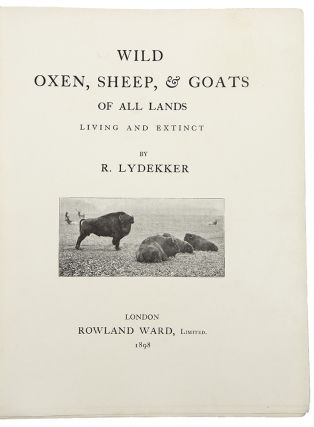 Wild Oxen, Sheep & Goats of All Lands Living and Extinct. Richard LYDEKKER