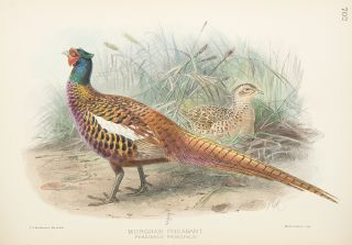A History of the Birds of Europe, including all the species inhabiting the Western Palaearctic Region