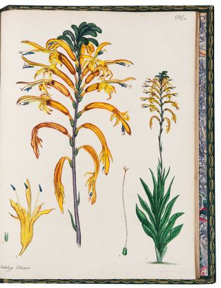 The Botanist's Repository, for New, and Rare Plants. Containing Coloured Figures of Such Plants,...