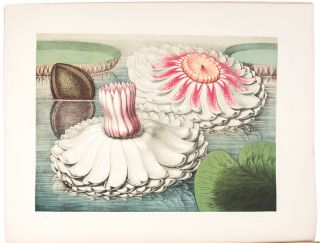 Victoria Regia; or the Great Water Lily of America. With a brief account of its discovery and...