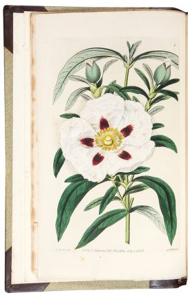 Cistineae. The Natural Order of Cistus, or Rock-Rose, Illustrated by Coloured Figures &...