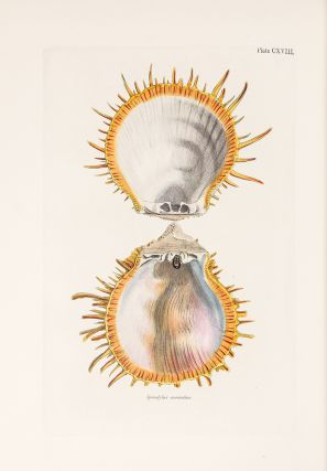 Conchologia Systematica, or Complete System of Conchology: In which the Lepades and Conchiferous Mollusca are described and classified according to their natural organization and habits