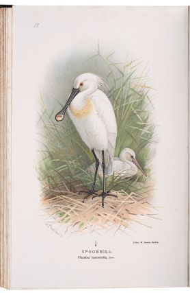 Coloured Figures of the Birds of the British Islands. Thomas Littleton Powys LILFORD