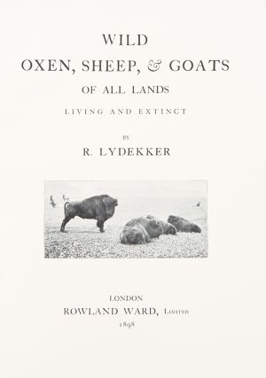 Wild Oxen, Sheep & Goats of All Lands Living and Extinct