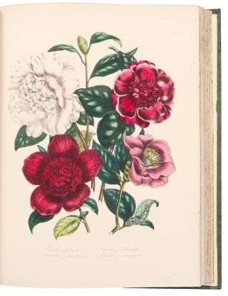 The Ladies' Flower-Garden of Ornamental Greenhouse Plants ... Second Edition. Jane Wells LOUDON