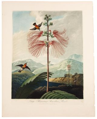 Large Flowering Sensitive Plant. Robert John THORNTON, - Peter REINAGLE