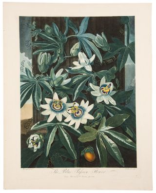 The Blue Passion Flower. Robert John THORNTON, - Peter REINAGLE