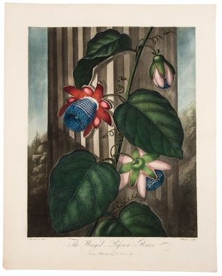 The Winged Passion Flower. Robert John THORNTON, - Peter HENDERSON