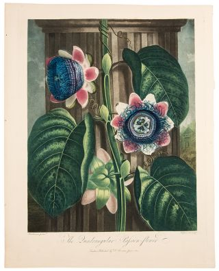 The Quadrangular Passion Flower. Robert John THORNTON, - Peter HENDERSON