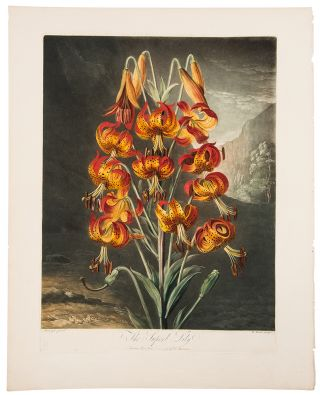 The Superb Lily. Robert John THORNTON, - Philip REINAGLE