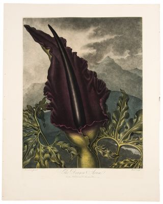 The Dragon Arum. Robert John THORNTON, - Peter HENDERSON