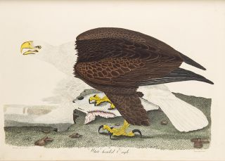 American Ornithology; or the Natural History of the Birds of the United States ... Plates.