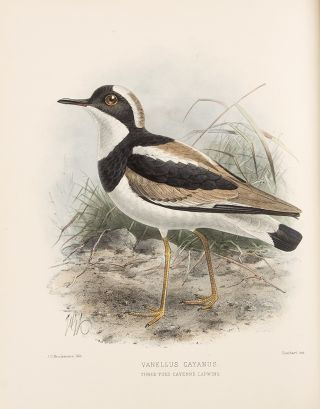The Geographical Distribution of the family Charadriidae, or the Plovers, Sandpipers, Snipes, and their Allies