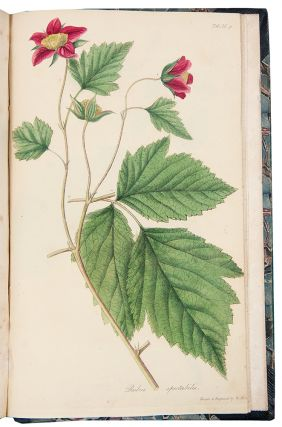 Flora Americae Septentrionalis; or, A Systematic Arrangement and Description of the Plants of North America. Containing, besides what may have been described by preceding authors, many new and rare species, collected during twelve years travels and residence in that country