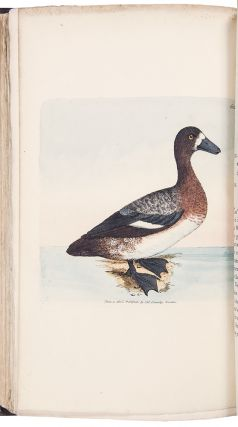 The British Miscellany: or Colored Figures of New, Rare, or Little Known Animal Subjects; many not before ascertained to be inhabitants of the British Isles