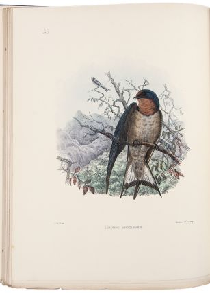 Monograph of the Hirundinidae or Family of Swallows