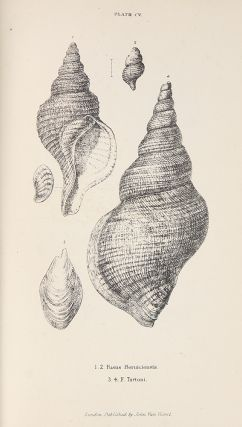 A History of the British Mollusca and their Shells