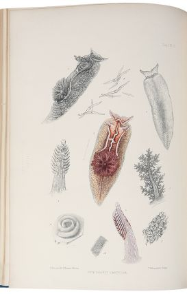 A Monograph of the British Nudibranchiate Mollusca