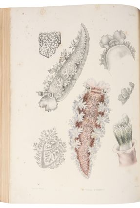 A Monograph of the British Nudibranchiate Mollusca. Joshua ALDER, Albany HANCOCK