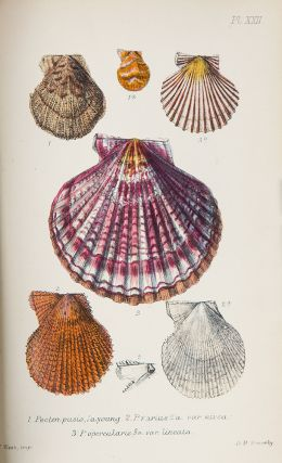 British Conchology or an Account of the Mollusca which now inhabit the British Isles and the...