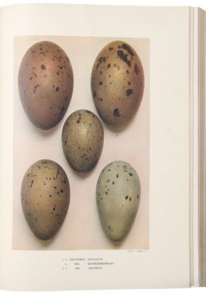 Eggs of the Birds of Europe including All the Species Inhabiting the Western Palaearctic Area....